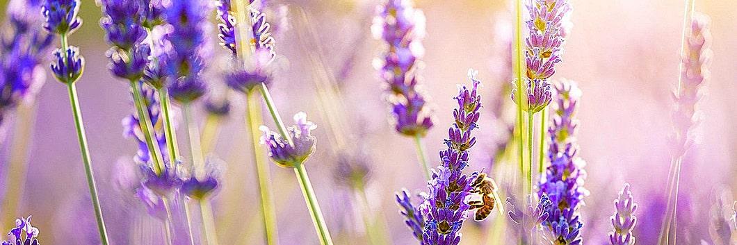 Naturella - ljepota i zdravlje